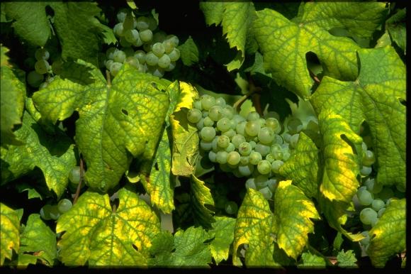 bourgogne-palatinat  le vin par tradition